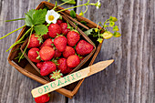 Fresh organic strawberries in a wooden basket