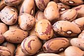 Dried borlotti beans close up
