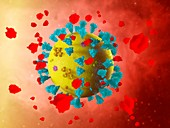Soluble ACE2 coronavirus treatment, illustration