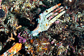 Plastic waste on a coral reef