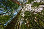 Temperate rainforest, Great Otway National Park, Australia