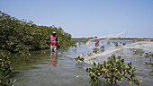 Fishermen in mangrove swamo