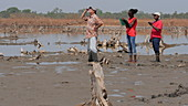 Scientists studying dead mangrove forest, Senegal