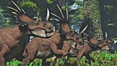 Herd of Styracosaurus dinosaur, illustration
