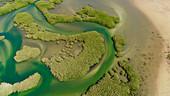 Mangrove swamp, aerial view