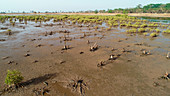 Recovering mangrove forest