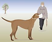 Dog and owner wearing face masks, illustration