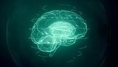 Brain scan, conceptual illustration