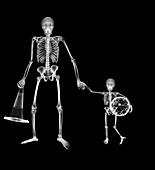 Adult skeleton taking child skeleton to football, X-ray