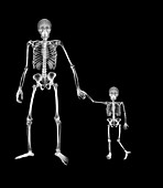 Adult and child holding hands, X-ray