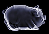 Empty piggy bank, X-ray