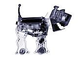 Electronic toy dog, X-ray