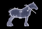Toy shire horse, X-ray
