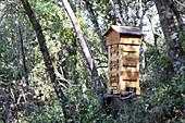 Französischer Warré-Bienenstock im Eichenwald (Spanien)
