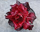 La Rosa di Padova Radicchio in a bowl