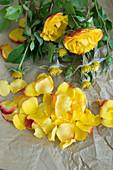 Blütenblätter und Blüten von Rosen