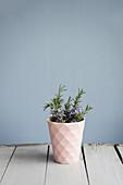 Blühende Zweige von Rosmarin im rosa Becher