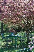 Sitzgruppe unter Zierapfelbaum 'Paul Hauber'