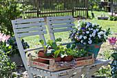 Obststeige mit Jungpflanzen von Gemüse und Kräutern neben Hornveilchen im handgetöpferten Kübel
