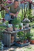 Blühender Schnittlauch, Hornveilchen und Jungpflanzen von Kapuzinerkresse, Tomaten und Paprika, Frau gießt Schnittlauch