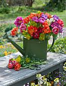 Strauß aus Tulpen und Wolfsmilch in grüner Gießkanne auf Bank im Garten