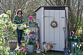 Töpfe mit Hyazinthen, Tulpen, Traubenhyazinthen, Moossteinbrech und Hornveilchen am Gerätehaus, Regal aus Holzkisten, Frau trägt bepflanzten Topf