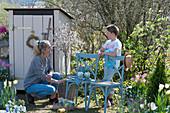Frau mit Sohn am Gerätehaus im Garten, Zierkirsche 'Kojou no mai', Tulpen in Körben, Obststiege mit Samentüten