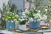 Weißes Arrangement mit Milchstern, Traubenhyazinthen 'Magic White' und Hornveilchen, Zweige als Dekoration