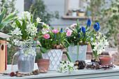 Frühlings-Arrangement mit Milchstern, Tausendschön, Traubenhyazinthen