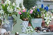 Österliches Arrangement mit Milchstern, Tausendschön, Traubenhyazinthen, Eiern und Osterhase