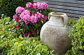 Schattenbeet mit Rhododendron yakushimanum 'Morgenrot' und Elfenblume, Amphore als Dekoration