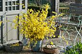 Strauß aus Zweigen vom Goldglöckchen, Körbchen mit Ostereiern als Osternest
