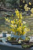 Frühlingsdekoration mit Sträußen aus Goldglöckchen und Narzissen in Flaschen, zusammengebunden mit Band auf Schale mit Moos