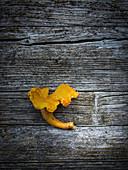 A chanterelle mushrooms on a wooden surface