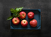 Fresh red Elstar apples in a wooden crate