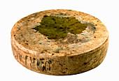 Ubriaco al Prosecco (Prosecco cheese, Italy)