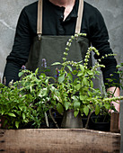 Person holding wooden crate of herbs