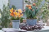 Tulpe 'Orange Princess' und Primel 'Goldnugget Apricot' in Zinktöpfen, Kranz aus Kätzchenweide