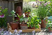 Obststiege mit Sommerblumen-Jungpflanzen in Tontöpfen, daneben blühender Schnittlauch