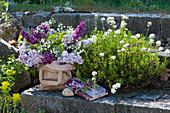 Schleifenblume wächst in Fugen der Steintreppe, Fliederstrauß in Papiertüte und Fliederblüte an Buch gebunden