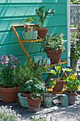 Blumentreppe mit Gemüse-Jungpflanzen und Kräutern