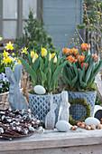 Tulpen 'Strong Gold' 'Orange Princess' in Zinktöpfen, Holz-Osterhasen, Ostereier, Steckzwiebeln und Kranz aus Kätzchenweide