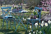 Kleine Sitzgruppe im Frühlingsgarten, Töpfe mit Hyazinthen, Tausendschön, Narzissen 'Toto' und Strahlenanemone