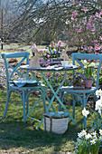Kleine Sitzgruppe im Frühlingsgarten, Töpfe mit Hyazinthen, Tausendschön, Narzissen 'Toto' und Strahlenanemone, österlich mit Ostereiern und Osterhasen