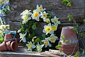 Kranz aus Narzissen-Blüten und Hainbuche