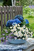 Schale mit Hortensie, Margerite, blaues Gänseblümchen und Thymian