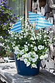 Blauer Topf mit weißen Zauberglöckchen und Elfensporn dekoriert mit Bayrischen Wimpeln