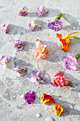 Edible flowers - pansy, dianthus, nasturtium, snapdragon