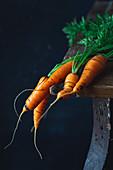 Junge Karotten aus dem Garten