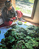 A woman cuts dried vine leaves